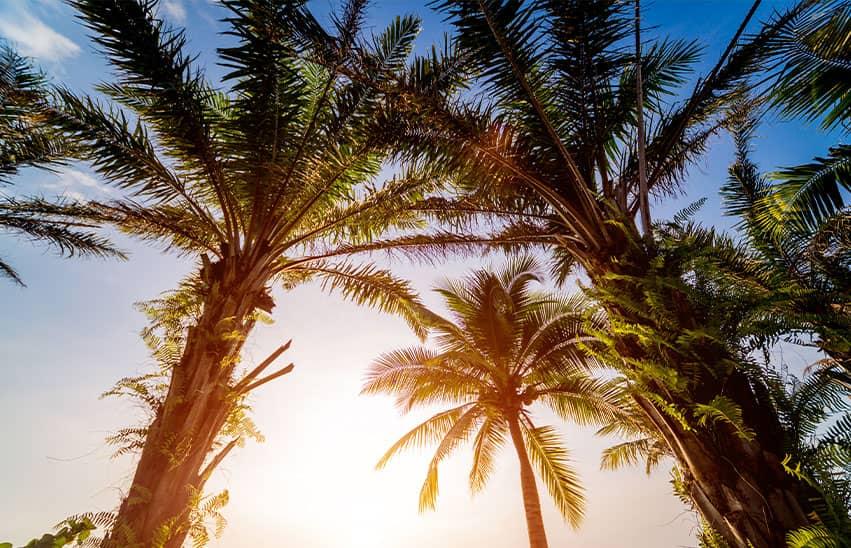 palm trees scenery